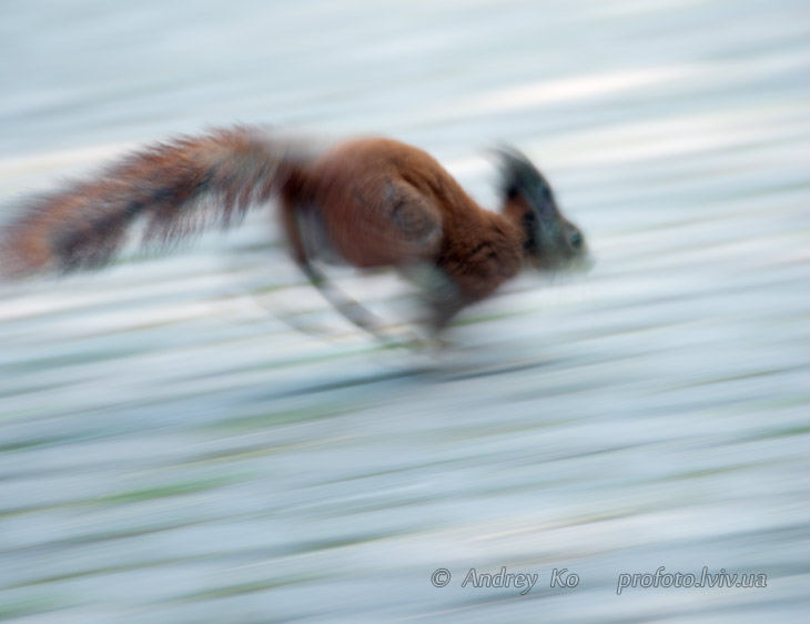 photo with blurred background squirrel which quickly moves